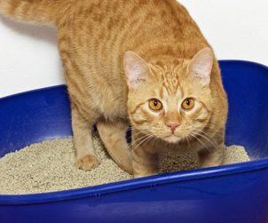 Kandungan Dalam Kotoran Kucing Bisa Mengobati Kanker